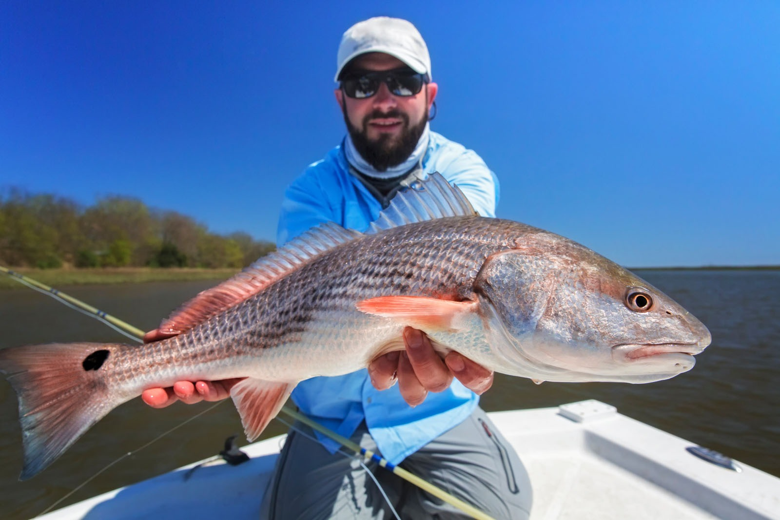 Hilton head fishing charters sightseeing cruises for Hilton head inshore fishing